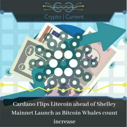 Cardano Flips Litecoin ahead of Shelley Mainnet Launch as Bitcoin Whales count increase